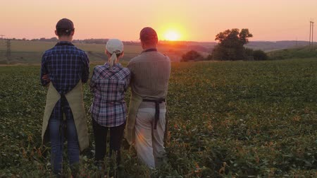 wife : The family of farmers - husband, wife and adult son stand on the mole, admire the beautiful sunset Stock Footage