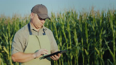 agricultores : A middle-aged farmer working in a field with a tablet against a background of high shoots of corn