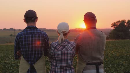 владелец : A group of farmers - a woman and two men watching the sunset over the field. Family agribusiness Стоковые видеозаписи