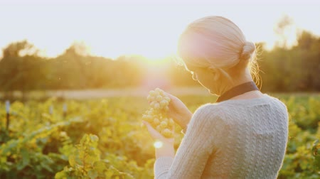 beautifully : A woman farmer stands in a vineyard holding a bunch of grapes. The setting sun beautifully illuminates her
