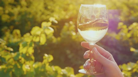 kırmızı şarap : A hand with a glass of white wine, gently shakes it against the background of the vineyard. Wine tasting at the winery Stok Video