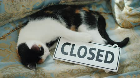 しない : The cat is lying on the bed with a sign closed. Out of business concept 動画素材