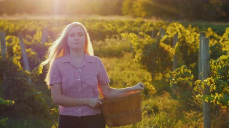 grape basket : Attractive woman with a basket walks through the vineyard in the sun Stock Footage
