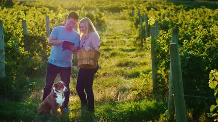 grape basket : Couple of farmers stands at the vineyard enjoys the tablet. Next to them is their dog Stock Footage