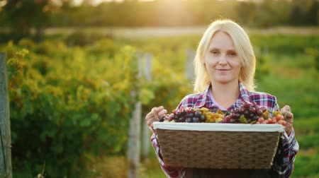 pincészet : Portrait of an attractive farmer with a basket of grapes. Smiles, looks into the camera Stock mozgókép