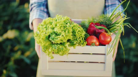 repolho : Hands of farmer hold wooden box with fresh vegetables. Organic food from a small farm Stock Footage