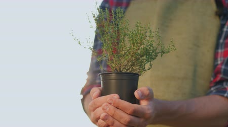 mar : The farmers hands hold a pot of thyme plant. Fresh spices from the bio-farm Vídeos