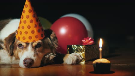 favori : Birthday dog lies near gifts and a small cake with a candle Stok Video