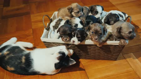 košíček : The naughty cat plays with a basket full of puppies. Unexpected gift concept