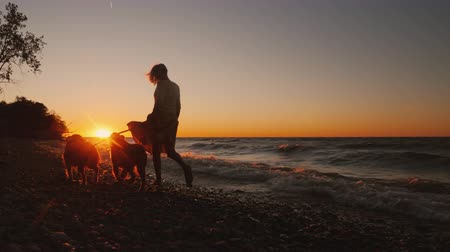 fiel : A woman walks her two dogs near the lake at sunset. Windy autumn weather Stock Footage