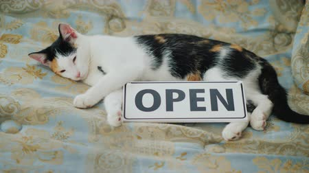 descanso : The cat is napping near the sign that says Open.