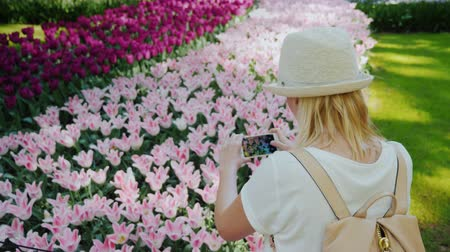 arka görünüm : A woman is taking pictures of tender pink tulips in Keukenhof Park. Traveling in the Netherlands concept Stok Video