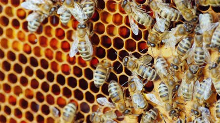 hive : Useful food and traditional medicine - bees are working inside the hive