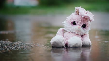 peluş : Unhappy wet bunny is sitting in a puddle in the rain Stok Video