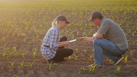 földműves : Two farmers work in the field in the evening before sunset. Inspect the green shoots on the field, use a tablet