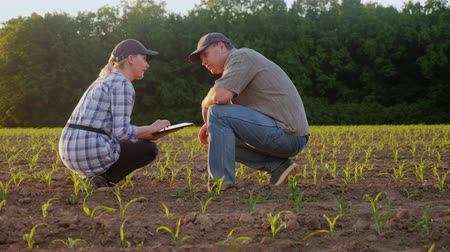 field study : A man and a woman work in the field. They look at the green shoots, use the tablet. Against the background of plantation Stock Footage