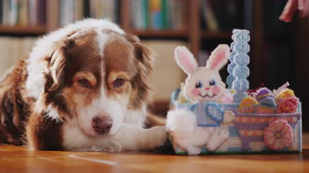vasárnap : The dog is given a basket with Easter decorations and an Easter bunny