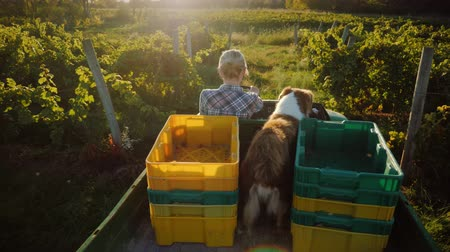 mechanization : A farmer on a mini tractor rides through the field. In the back of his faithful dog. Rural life concept Stock Footage