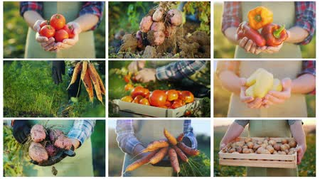 devět : Collage of 9 videos on farming and harvesting