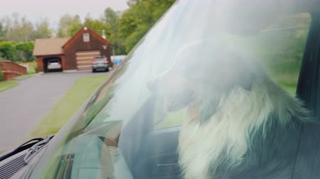 владелец : View through the windshield - the dog rides in the front seat on the passenger seat. Pet Travel Concept