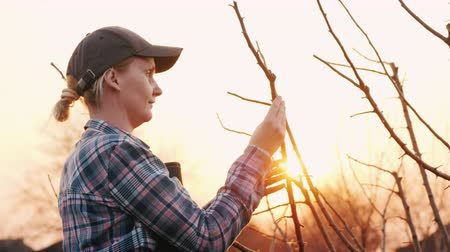 farmers : Young woman gardener examines tree branches in the garden. Side view view Stock Footage