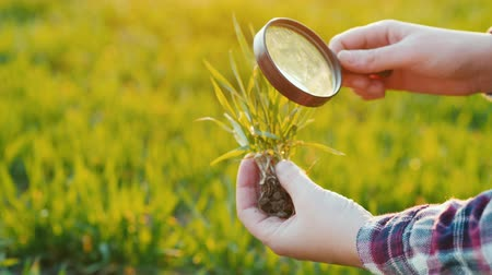 brotos : Study wheat germ through a magnifying glass. Research in agribusiness