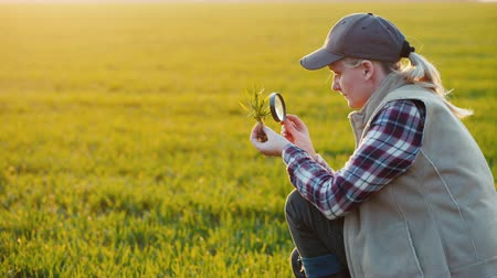 agronomist : Young woman agronomist studying sprouts on the field Stock Footage