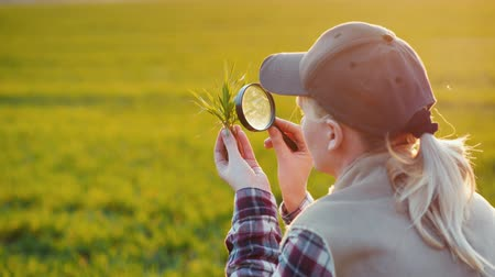 hajtások : Back view of Young woman agronomist studying sprouts on the field Stock mozgókép