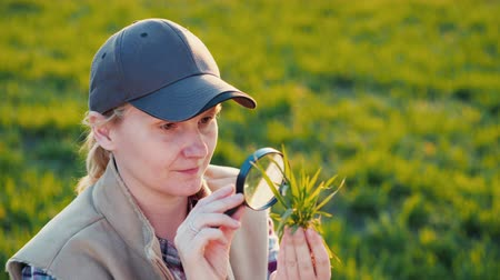 agronomist : Portrait of a young woman agronomist studying wheat shoots through a magnifying glass
