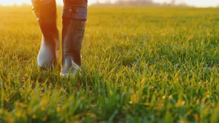 goes : The feet of a farmer in rubber boots are walking along a green field of wheat. Stock Footage