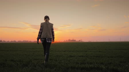 initiatief : Woman farmer walking towards a setting sun across a field of wheat, rear view Stockvideo