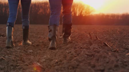footgear : Legs of two farmers in rubber boots walking along a plowed field at sunset