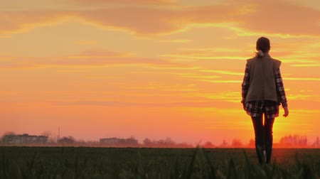 field study : Young farmer against the pink sky and the setting sun goes ahead across the field. Success in agribusiness concept