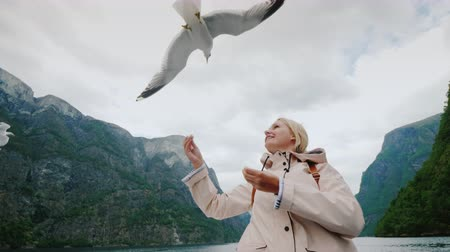 tame animal : A seagull eats bread from the hands of a woman against the backdrop of the picturesque fjords of Norway. Journey to Scandinavia and the amazing nature of the Nordic countries Stock Footage