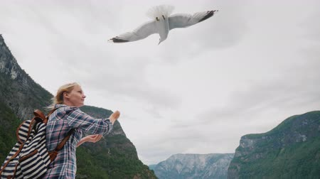 A tourist feeds the birds on the background of the fjords of Norway. Scenic Cruise Vídeos