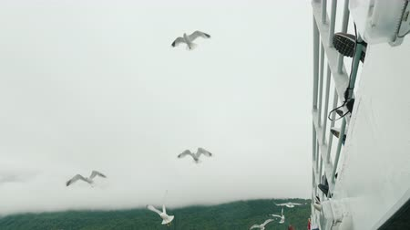 Gulls fly near the side of a cruise ship, where they are fed by tourists