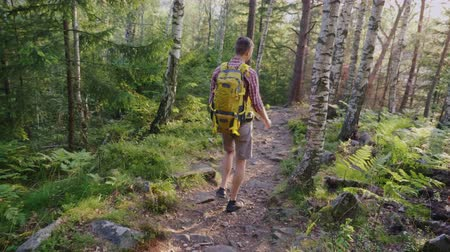 A lonely traveler with a backpack walks along a mountain path in the forest. In the rays of the setting sun. Rear view