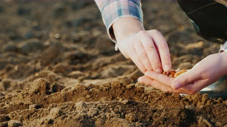 földműves : Planting seeds in the ground, only hands are visible in the frame. New life concept
