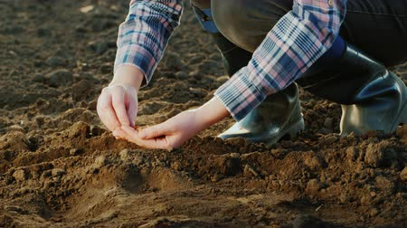 bezelye : A farmer plants grain in his field. Work in the garden Stok Video
