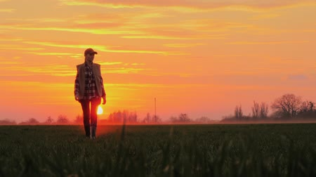 agronomist : A confident farmer walks across the field towards the rising sun against the backdrop of picturesque clouds.