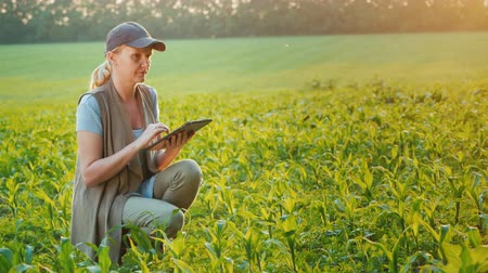 slave : A farmer works in a field of young corn, uses a tablet. Side view Stock Footage
