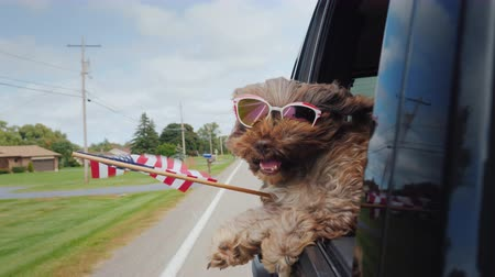 favori : Funny Dog with the American flag looks out of the window of the car. 4th of july and independence day in usa concept