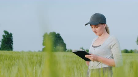 agrarian : Side view of Woman farmer with tablet in hand stands on green wheat field
