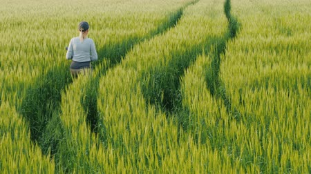 proprietário : Young woman farmer walking in a field of green wheat. Back view