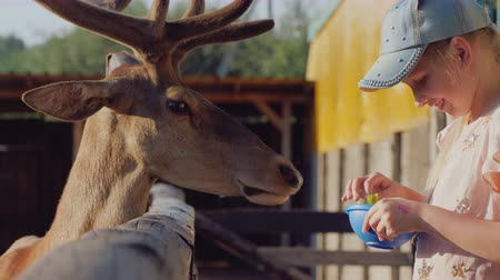 A child feeds a cute deer near the fence