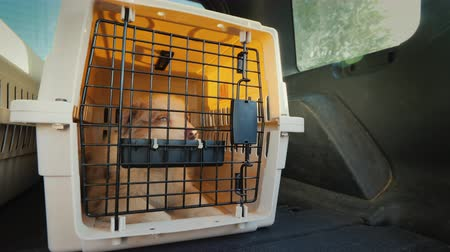 kennel : Cage with a puppy rides in the trunk of the car. Transportation and delivery of live animals
