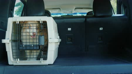 gaiola : The driver loaded into the trunk of the car cage with puppies. Transportation and animal delivery concept