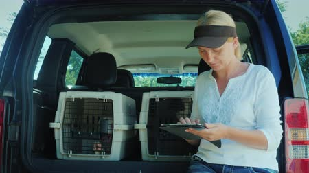 A woman uses a tablet, stands at the trunk of a car where there are cells with puppies. Sale and delivery of pets