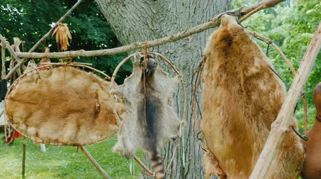 skins : The skins of dead animals are dried in a hunting camp