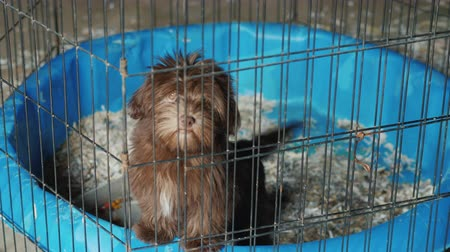 A small dog is sitting in a cage. Transportation and quarantine of animals Стоковые видеозаписи